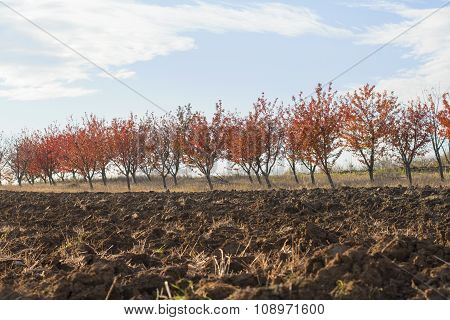 Fertile Land With Red Leaves Orchard Background