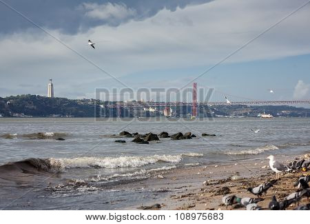 Birds on beach of Tagus river