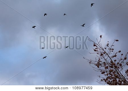 Silhouettes Of Birds On The Background Of A Stormy Sky