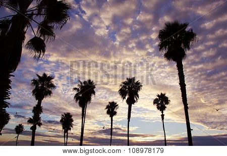 California Skies Palm Trees Sunset