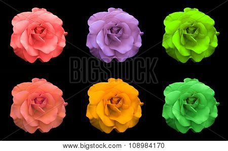 Mix Collage Of Rose Flowers: Acid Rose, Violet, Acid Green, Rose, Orange, Green Isolated On Black