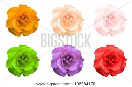 Mix Collage Of Rose Flowers: Acid Rose, Violet, Acid Green, Rose, Orange, Green Isolated On White