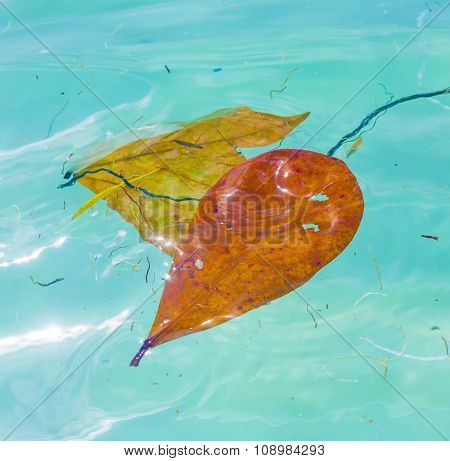 Leaves Are Swimming In The Water And Give A Wonderful Harmonic Structure