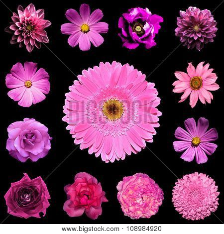 Mix Collage Square Styled Of Natural And Surreal Pink Flowers 13 In 1: Dahlia, Primula, Perennial As
