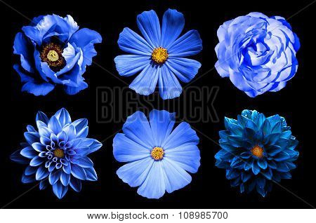 Mix Collage Of Natural And Surreal Blue Flowers 6 In 1: Dahlias, Primulas, Rose And Peony Isolated O