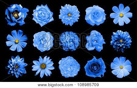 Mix Collage Of Natural And Surreal Blue Flowers 15 In 1: Dahlias, Primulas, Perennial Aster, Daisy F