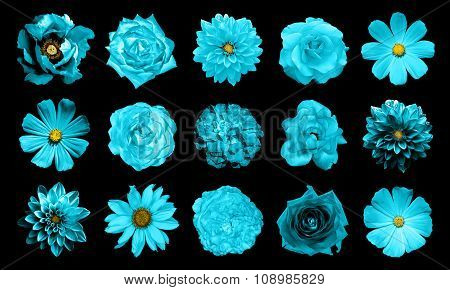 Mix Collage Of Natural And Surreal Cyan Flowers 15 In 1: Dahlias, Primulas, Perennial Aster, Daisy F