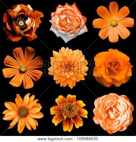 Mix Collage Of Natural And Surreal Orange Flowers 9 In 1: Peony, Dahlia, Roses, Primulas, Decorative