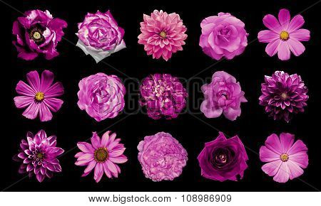 Mix Collage Of Natural And Surreal Pink Flowers 15 In 1: Dahlias, Primulas, Perennial Aster, Daisy F