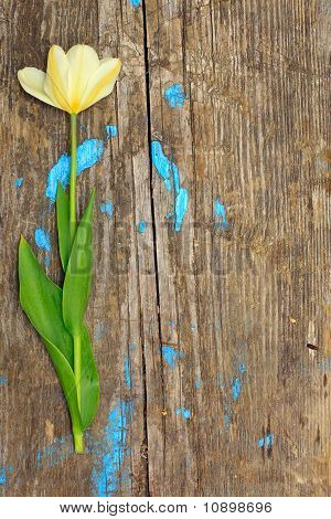One Flower On A Wooden Board
