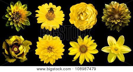 Mix Collage Of Natural And Surreal Yellow Flowers 8 In 1: Peony, Dahlias, Rose, Decorative Sunflower
