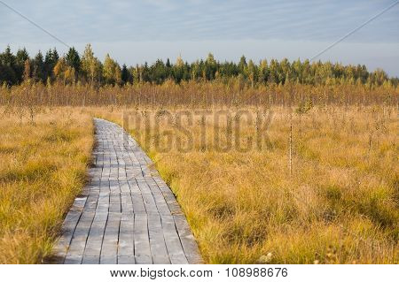 Road In The Yellow Autumn Fild At The Swamp