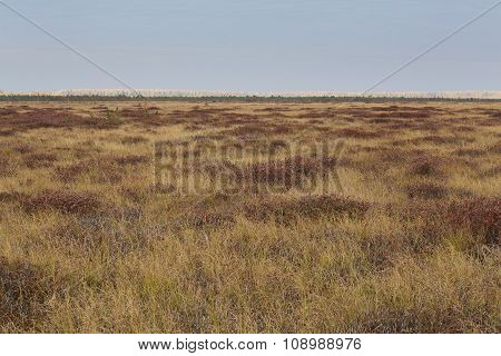 Autumn Brown Field At The Swamp