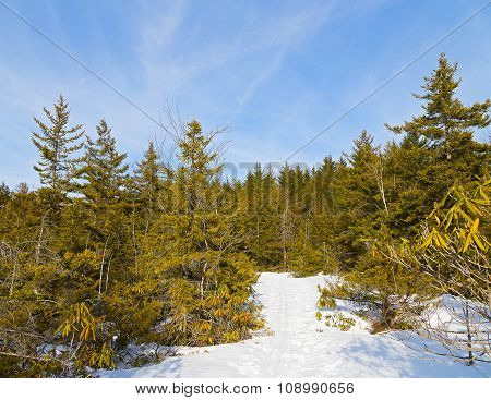 Skiing fields in West Virginia with picturesque background of forest trees.