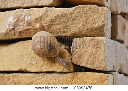snail crawl slowly on the wall