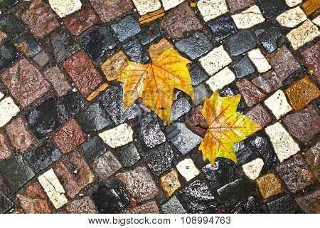 Pattern Of Wet Cobble Stone On Sidewalk With Leaf
