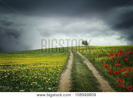 Lone tree in a yellow field and poppies