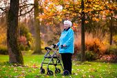 ������, ������: Senior Lady With A Walker In Autumn Park