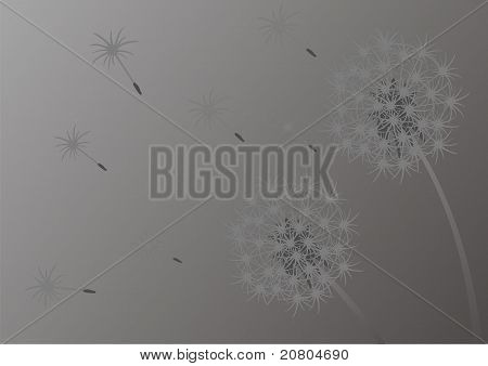 Background dandelions
