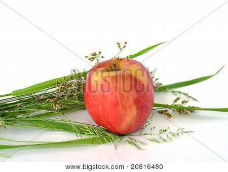 Fresh yellow apple on a white background