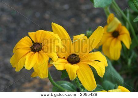 Flowers 011