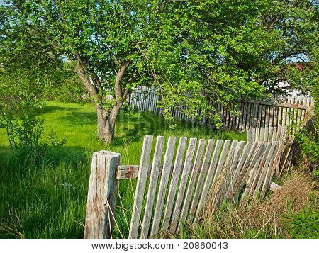 Beautiful Tree And Broken Fence
