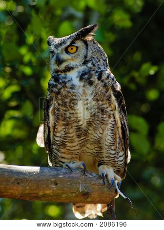 Eagle-Owl 2