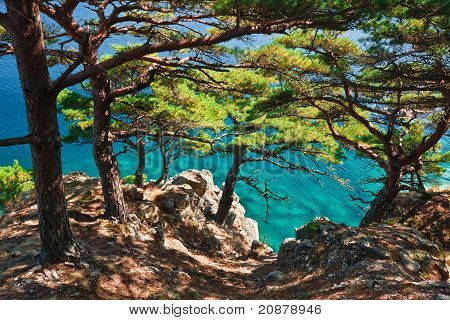 Russia, Primorye, Cedar Shore Blue Sea