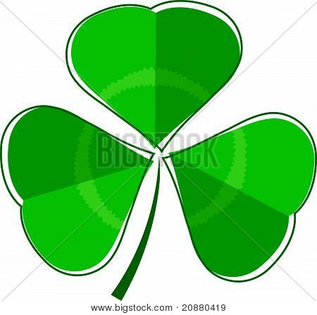Three leaf clover plant