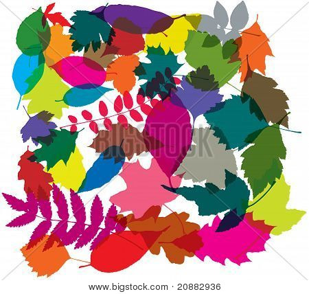 Vector Colorful Background Of Leaves