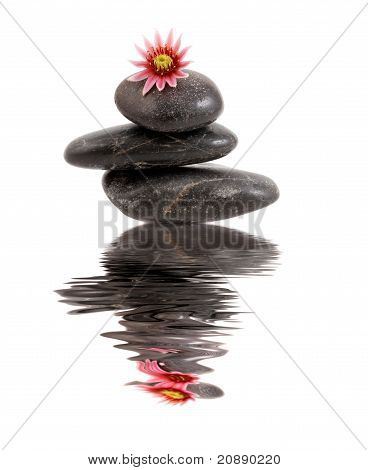 Stones, flower, reflection