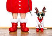 Christmas Santa Claus Dog poster