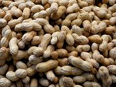 Natural Peanuts In Their Shells