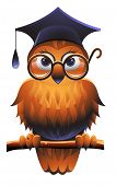 stock photo of bookworm  - Wise owl wearing a square academic cap and glasses - JPG
