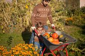 Toddler Girl And Her Father Harvesting Orange Pumpkins At The Wheelbarrow poster