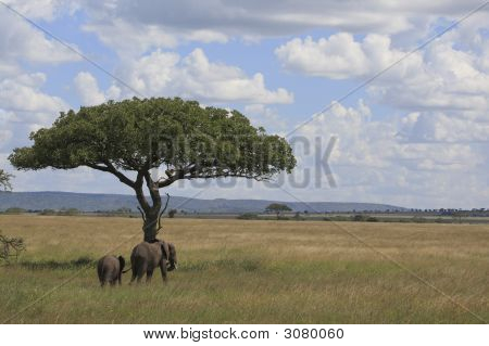 Elephant'S In The Serengeti
