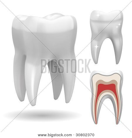 Excellent Vector Tooth