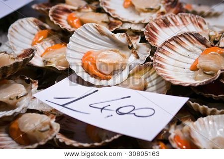 Scallops For Sale At The Rialto Market In Venice