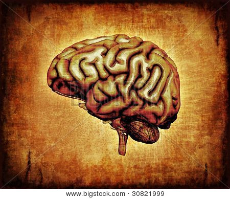 Human Brain On Parchment