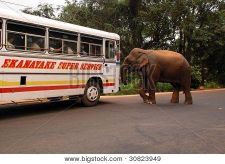 Wild Elephants Attacks Passenger Coach