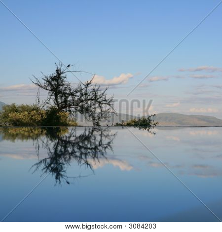 Reflection In Swimming Pool Lake Manyara