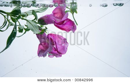 underwater purple flower and leaves with bubbles