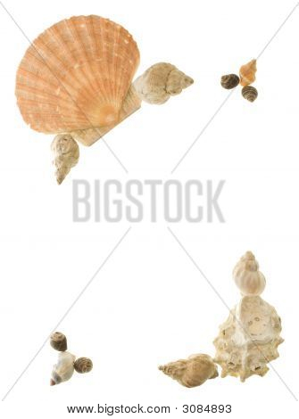 Shell Corners