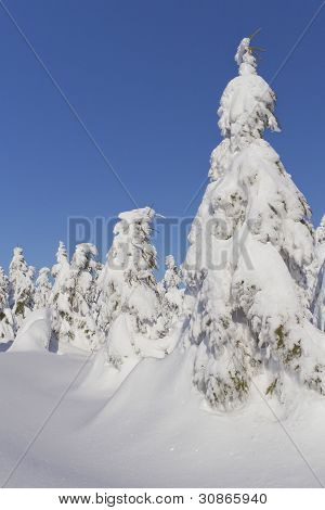 Winter View Of Snow Covered Mountain And Trees (mountains Jeseniky, Czech Republic)