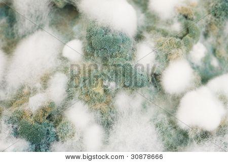 Mold Macro Shot