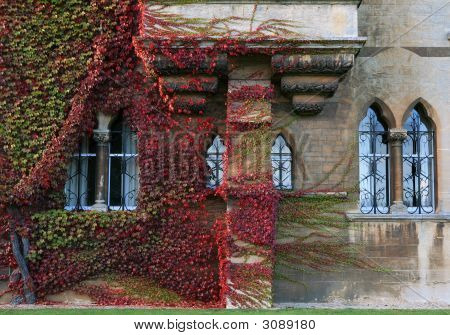 Ivy Covered Oxford College Walls