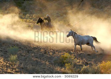 Cowboy Beauty
