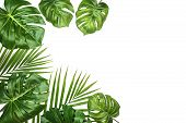 Tropical Leaves Monstera And Palm Isolated, Swiss Cheese Plant, Isolated On White Background. Flat L poster