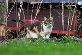 Colourful Domestic Kitten Walks In Raspberry Bush In Spring. Wonderful Felis Catus Explore Her Terri poster