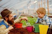 Soil Fertility Concept. Examine Quality Of Soil Fertility. Good Soil Fertility In Modern Greenhouse. poster
